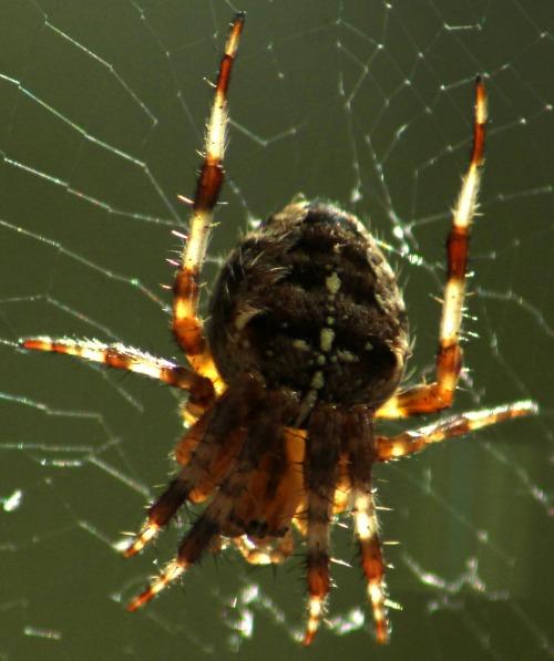 110925_spider_4